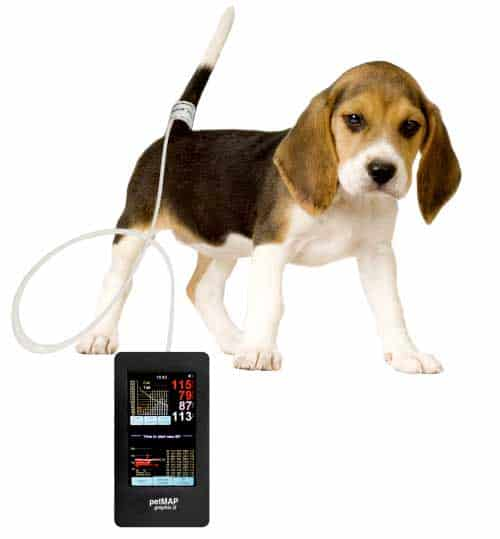 petmap singapore blood pressure BP dogs