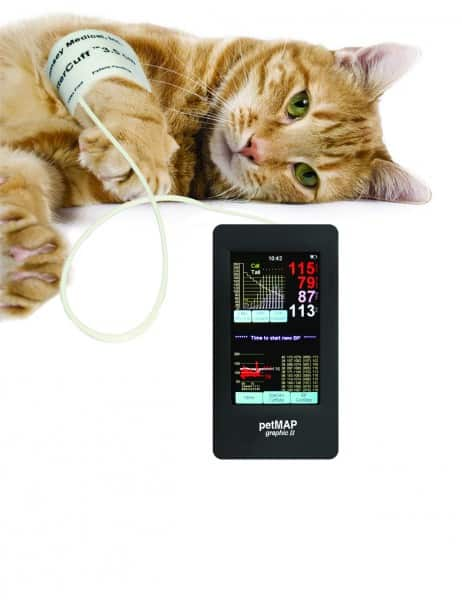 petmap blood pressure cats