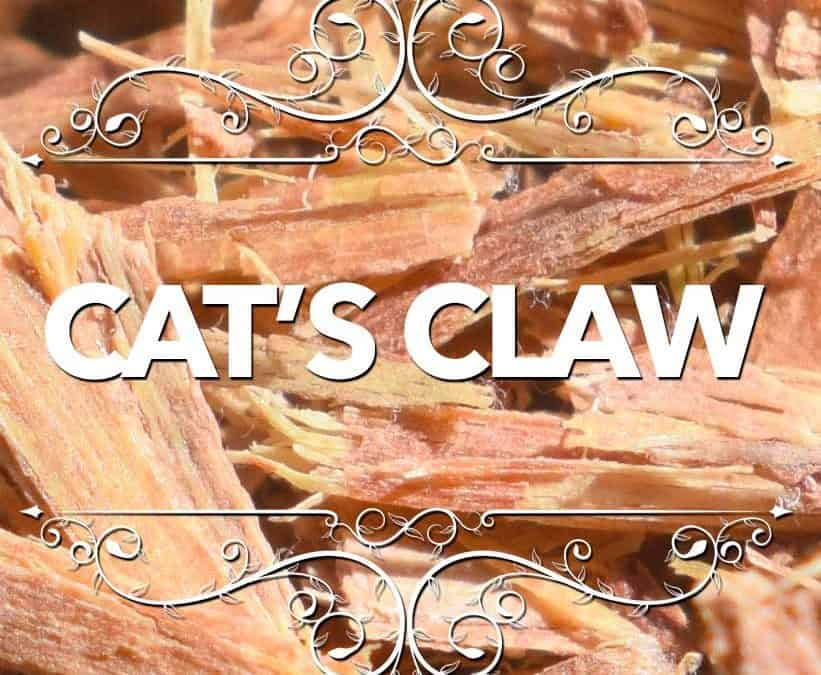 Cat's Claw for Dogs
