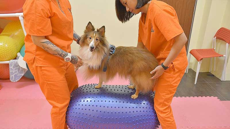 dogs cats pets animals physiotherapy therapeutic exercise